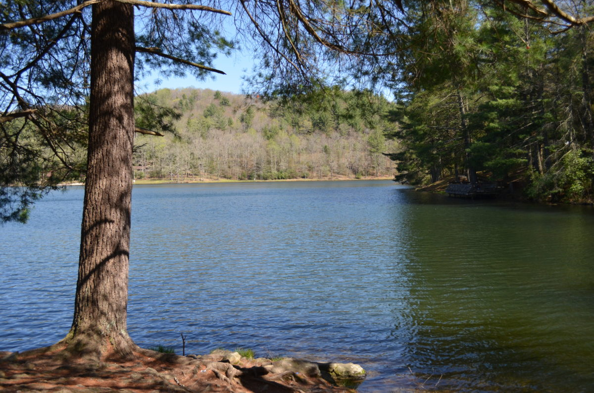 Wahoo creek park on lake lanier for Lake lanier fishing spots