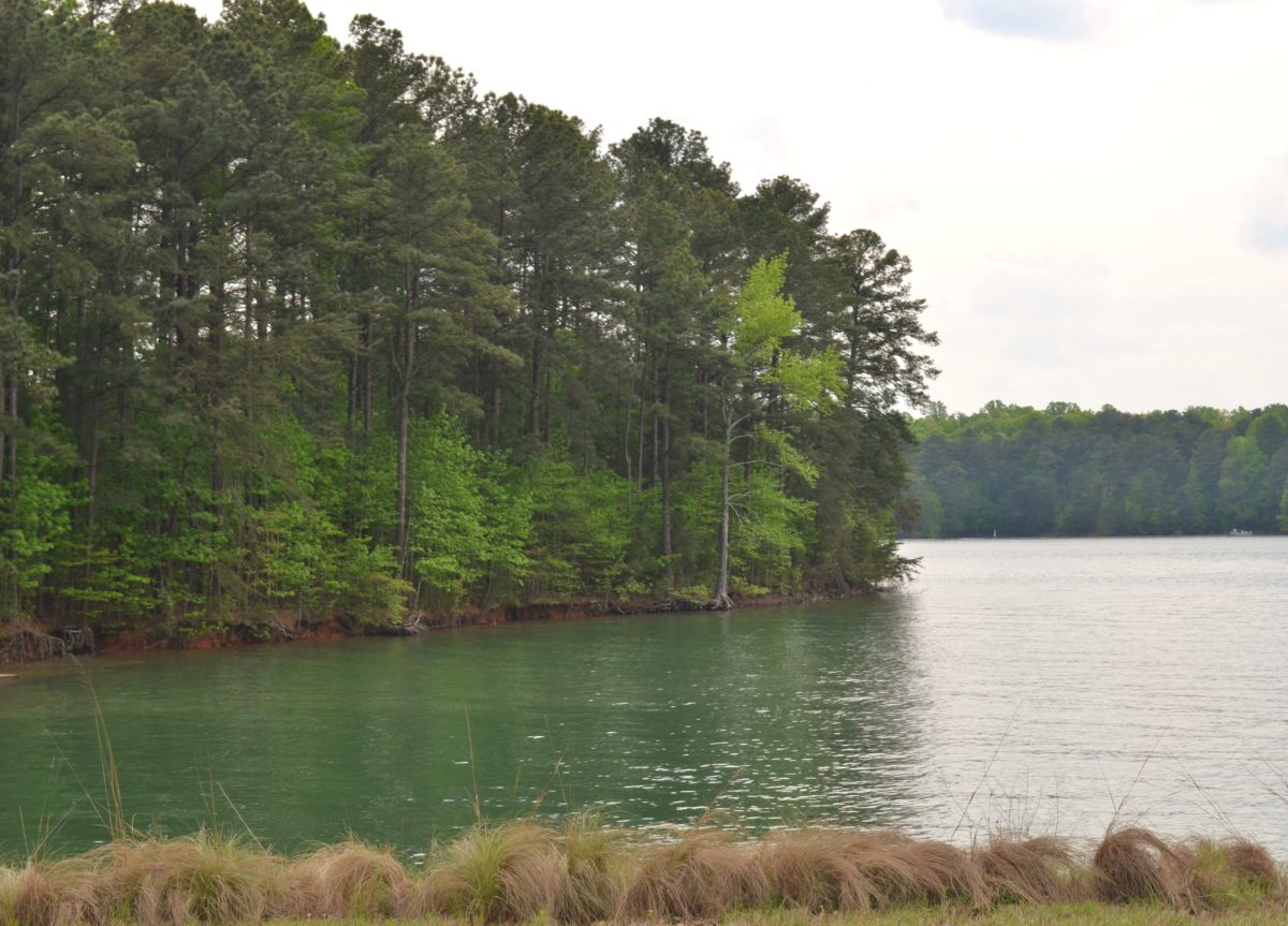 Shoal creek campground on lake lanier for Lake lanier fishing spots