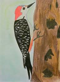 Red-bellied-Woodpecker-by-Sophia-Bobo