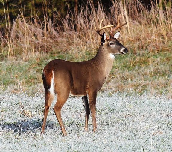 2018-2019 Deer Season Dates | Georgia Afield